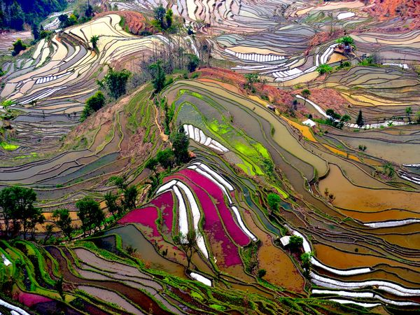 Терри Борнер. Рисовые террасы. Китай