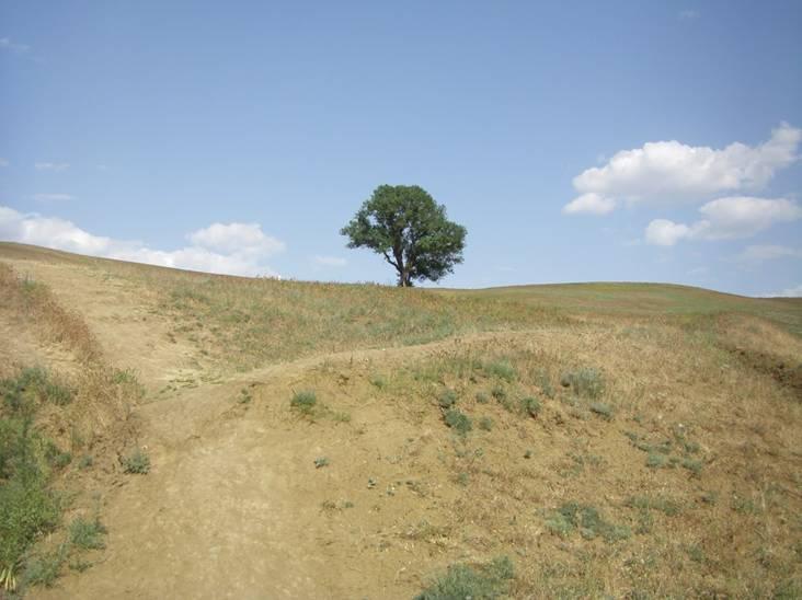 Ергени, священное дерево у пос. Хар-Булук