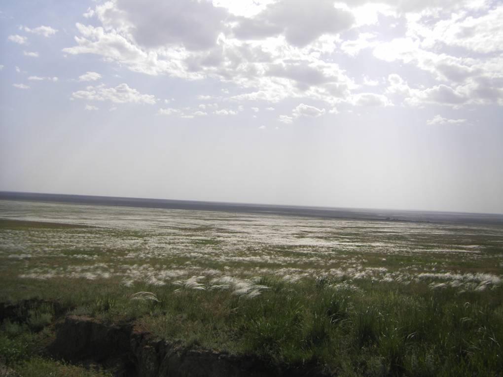 Западная часть Калмыкии, ковыль, май 2014,