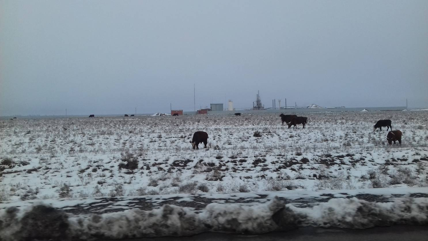 Юг Калмыкии, Черноземельский район, ноябрь 2016