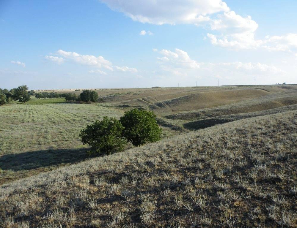 Возвышенность Ергени, у села Троицкое, юго-западная часть Калмыкии (Целинный район), май 2014.