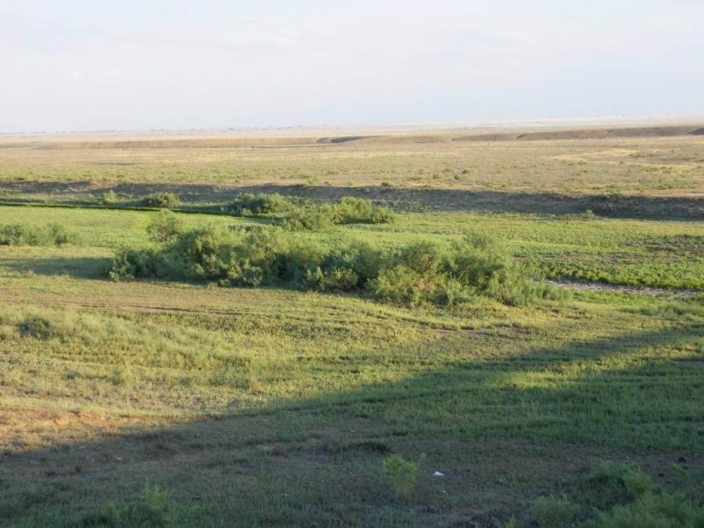 Верховья р. Яшкуль, западная часть Калмыкии (Целинный район), май 2014