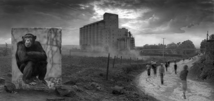 Ник Брандт. Фабрика и шимпанзе, 2014