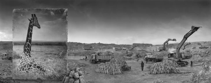 Ник Брандт. Каменоломня и жираф, 2014