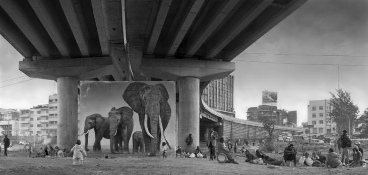 Ник Брандт. Слоны под мостом, 2015