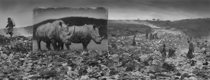 Ник Брандт. Мусорная свалка и носороги, 2015