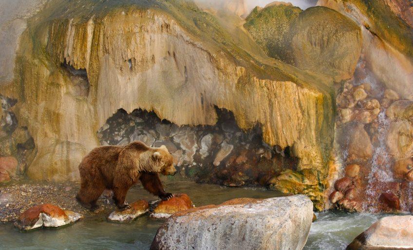 Медведь в Долине гейзеров. Игорь Шпиленок